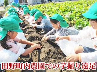 宮崎市田野町内農園での芋掘り遠足