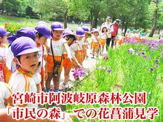 宮崎市阿波岐原森林公園 「市民の森」での花菖蒲見学
